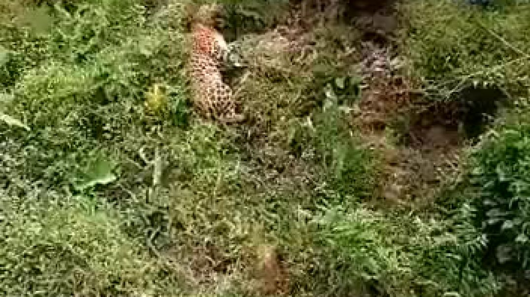 African Man gets mauled by leopard